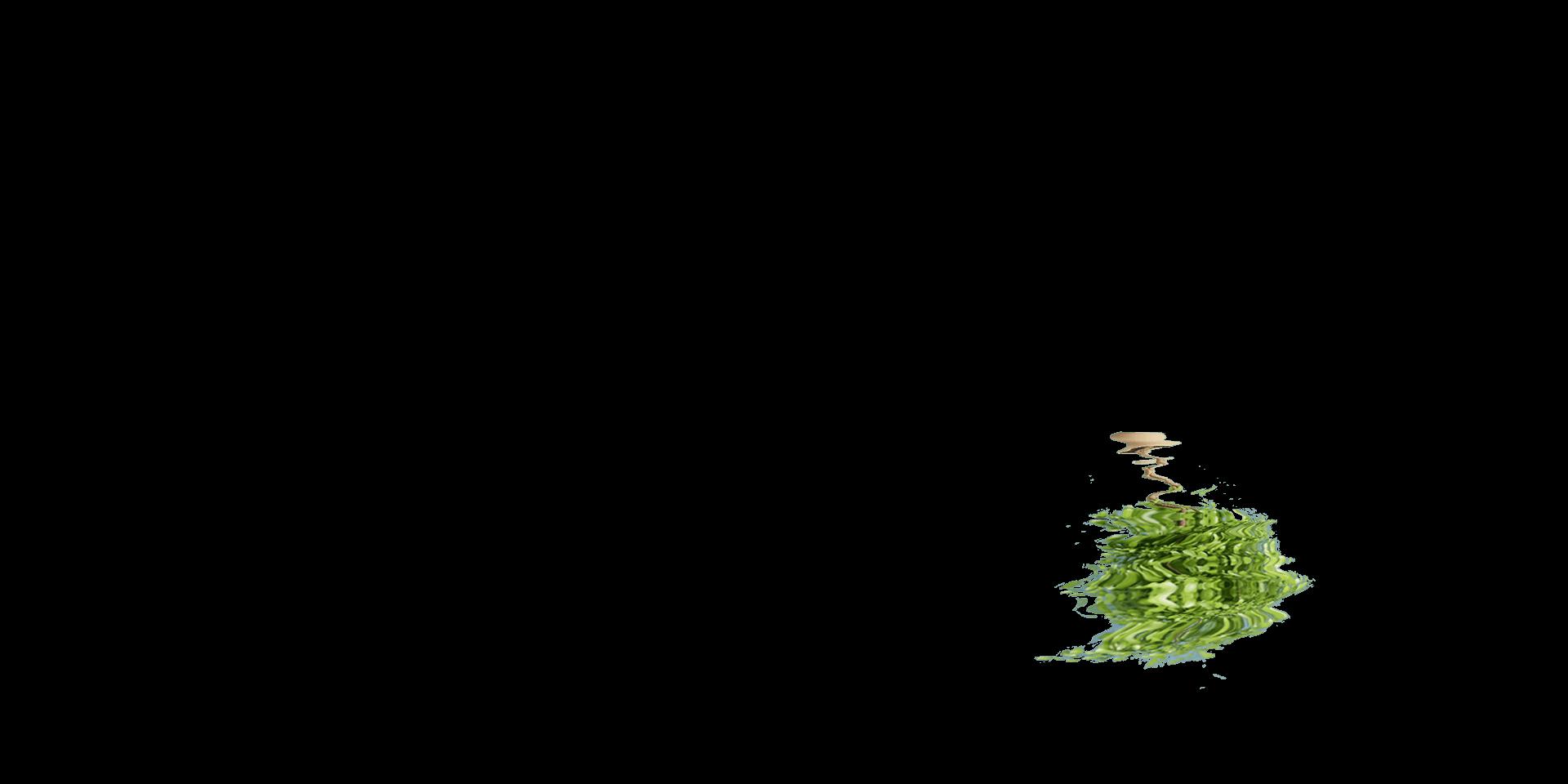 reflet arbre